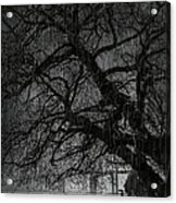 Heavy Rain Acrylic Print by Svetlana Sewell