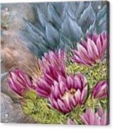 Hedgehog In Bloom Acrylic Print