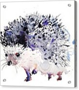 Hedgehog Acrylic Print by Krista Bros
