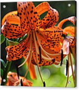 Heirloom Beauty Acrylic Print