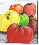 Heirloom Tomatoes Acrylic Print