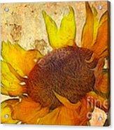 Helianthus Acrylic Print
