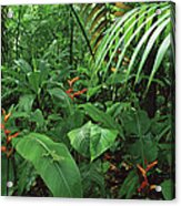 Heliconia And Palms With Green Anole Acrylic Print