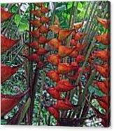 Heliconia Haven Acrylic Print