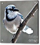 Hello Blue Acrylic Print