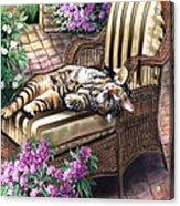 Hello From A Kitty Acrylic Print by Regina Femrite