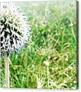 Hello Acrylic Print by Lucy D