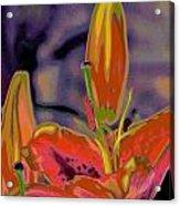 Hemerocallis  Acrylic Print