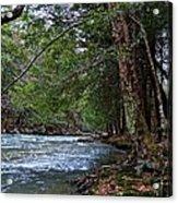 Hemlock Creek Edge Acrylic Print