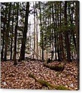 Hemlock Forest Acrylic Print