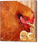 Hen With Chick On Wood Acrylic Print