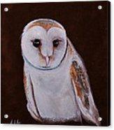 Henry The Owl Acrylic Print