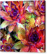 Hens And Chicks Series - Garden Brass Acrylic Print