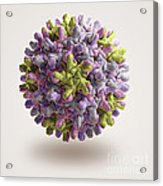 Hepatitis B Virus Acrylic Print
