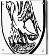 Heraldry Pelican Acrylic Print