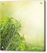 Herbs With Copyspace Acrylic Print