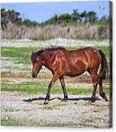 Herd 23 Acrylic Print