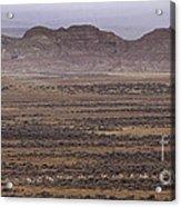 Herd Of Antelope   #8573 Acrylic Print