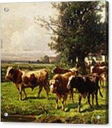 Herd Of Cows Acrylic Print