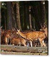 Herd Of Deer In A Dark Forest Acrylic Print