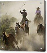 Herding Horses Oregon Acrylic Print