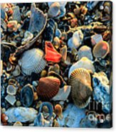 Here A Shell There A Shell Acrylic Print