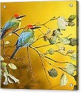 Here Comes The Sun - Rainbow Bee-eaters Acrylic Print
