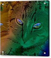 Here Kitty Kitty Acrylic Print