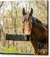 Here's Looking At You Acrylic Print