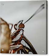 Here's Looking At You Squared Acrylic Print