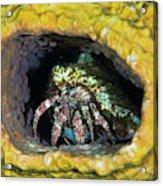 Hermit Crab In Yellow Vase Sponge, St Acrylic Print