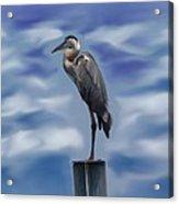 Heron 1 Acrylic Print