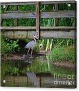 Heron 14-2 Acrylic Print