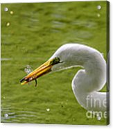 Heron And Dragonfly Acrylic Print