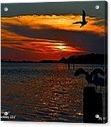 Heron And Seagull Sunset I Mlo Acrylic Print