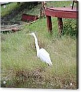 Heron And The Canal Acrylic Print