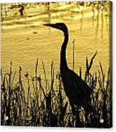 Heron At Sunrise Acrylic Print