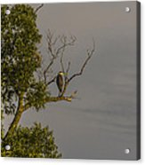 Heron Greets The Day Acrylic Print