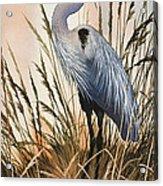 Heron In Tall Grass Acrylic Print