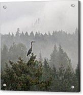 Heron In The Mist Acrylic Print