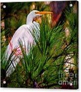 Heron In The Pines Acrylic Print