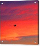Heron Into The Sunset Acrylic Print