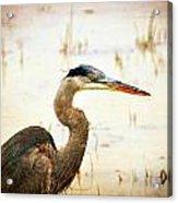 Heron Acrylic Print by Marty Koch