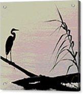 Heron Morning Acrylic Print
