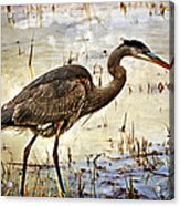 Heron On A Cloudy Day Acrylic Print