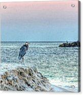 Heron On Beach Acrylic Print