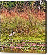 Heron On Shore Of Rapti River In Chitwan Np-nepal  Acrylic Print