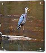 Heron On The Creek Acrylic Print