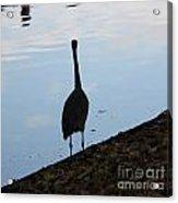 Heron On The River Acrylic Print