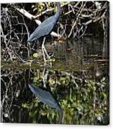 Heron Reflection Acrylic Print